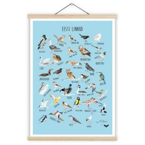 Poster ja puidust riputi - Eesti linnud